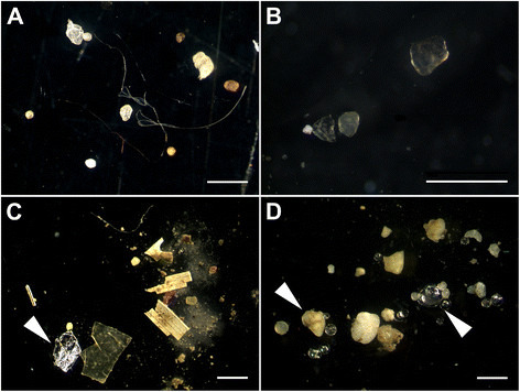 Microplastics_in_sediments.jpg